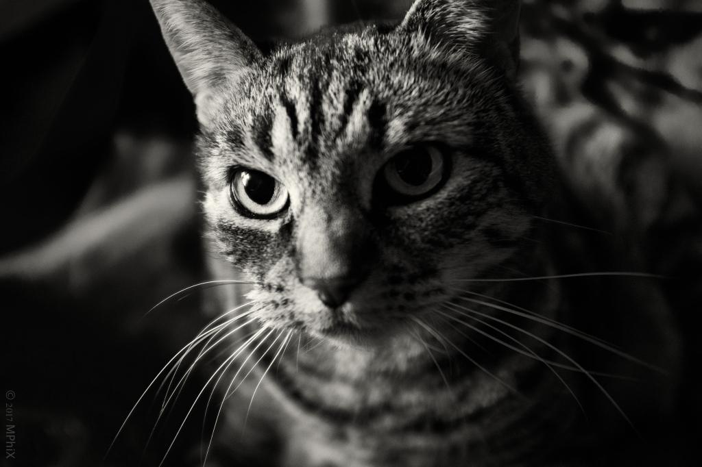 home-catipuss-mogensis-bw_mphix