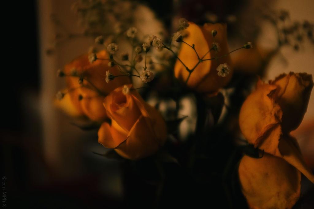 home-yellow-valentines-roses-fuji-160s-filter_mphix