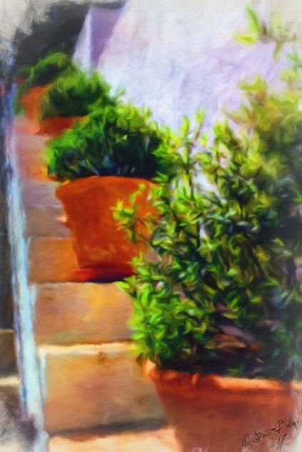Granada - Sketches in Colour - Pot Plants 1a_MJONESPHI